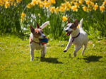 Plant Safety for Pets