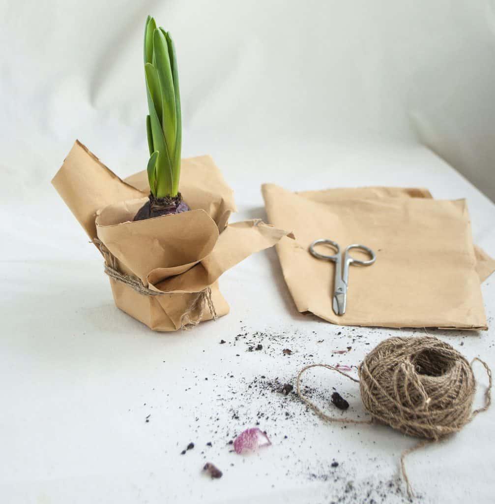 Homemade Biodegradable Seedling Pot