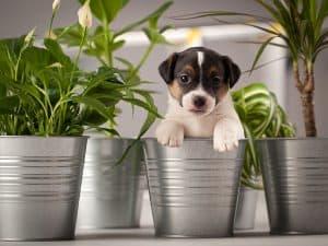 puppy in flower pot