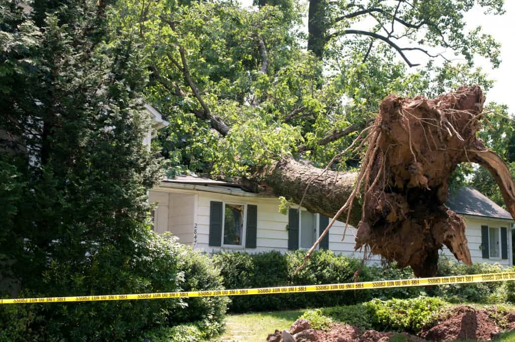 Uprooted tree on roof